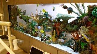 Custom Aquariums And Saltwater Fish Los Angeles