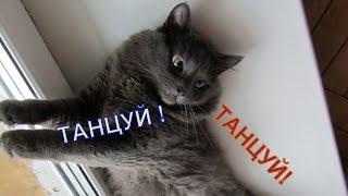 Танцуй танцуй . Серый кот . Улыбнитесь )))