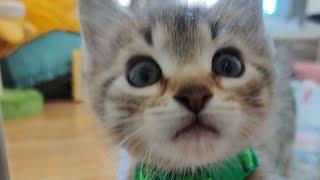 Sunday Kittens Take 2 2021-03-07