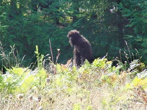 Bigfoot Is Real: Cryptid Lives On In Latest Viral Video