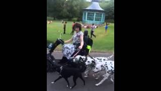 Dalmatians (and Terrier Mix) Run With Mobility Scooter