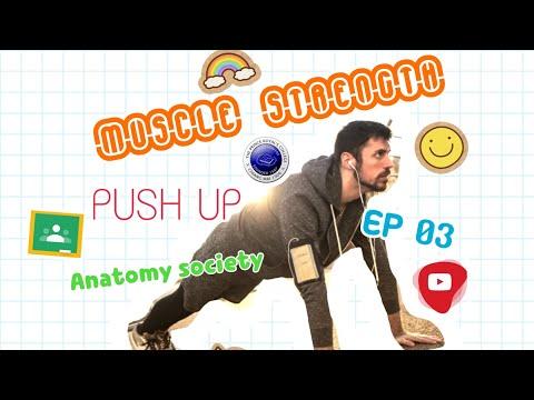 Muscle Strength ( ความแข็งแรงของกล้ามเนื้อ )EP 3 : Anatomy Society