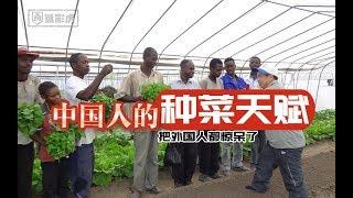 非洲人跟着中国人学插秧,学耕地,学种菜,学开拖拉机,黄瓜很受欢迎,...