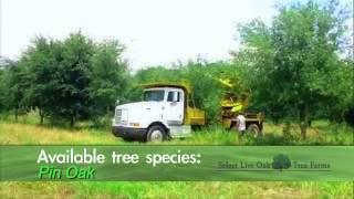 Select Live Oak Tree Farms in Shreveport-Bossier City, Louisiana