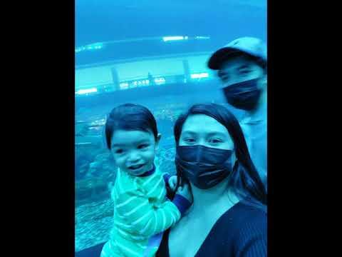 dubai aquarium and underwater zoo 2021