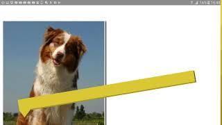 Топ 10 самых умных пород собак