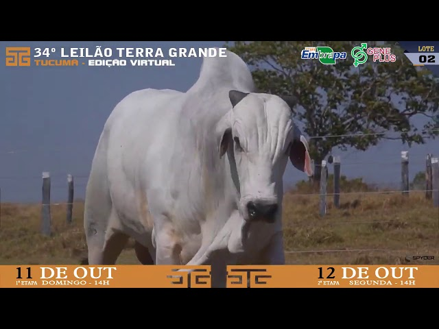 LOTE 002