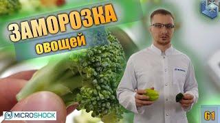 Bonduelle. Тест заморозки броккли, кабачка, болгарского перца по акустической технологии.