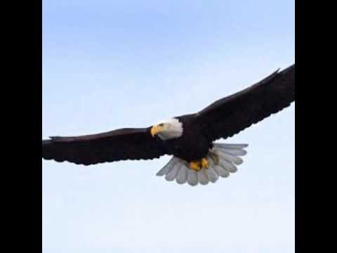 Fly High Like an EagleGary GrubbsBlackmont