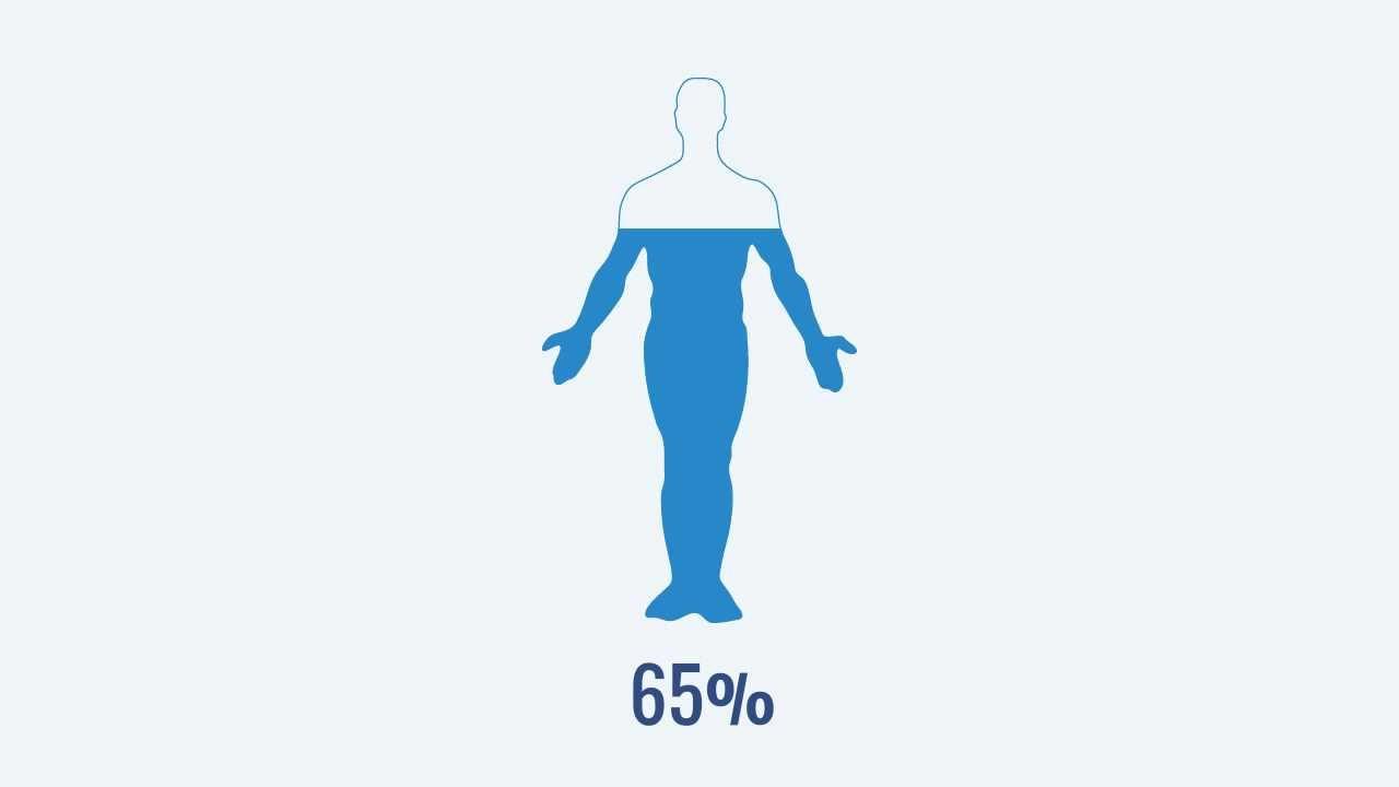Cafc L Acqua E Il Corpo Umano Youtube