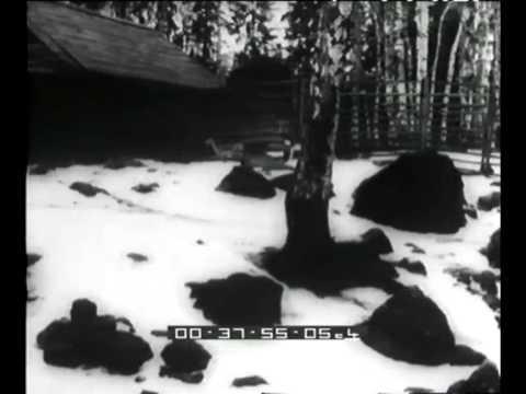 Neve e animali