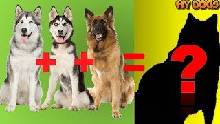 20 Unbelievable CUTE CROSS breed DOGs PT.1[HD]★2018