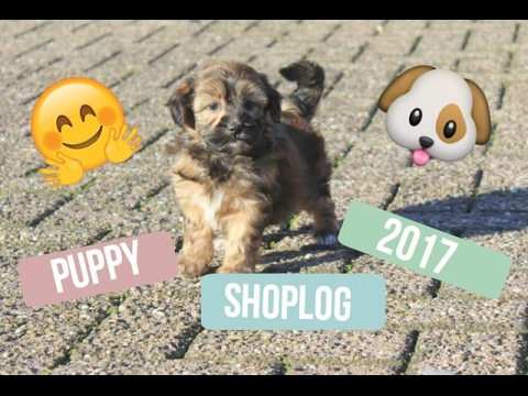 PUPPY SHOPLOG 2017 || Glossytime