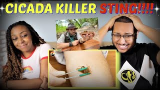 "Brave Wilderness ""Stung By A Cicada Killer!"" REACTION!!!"