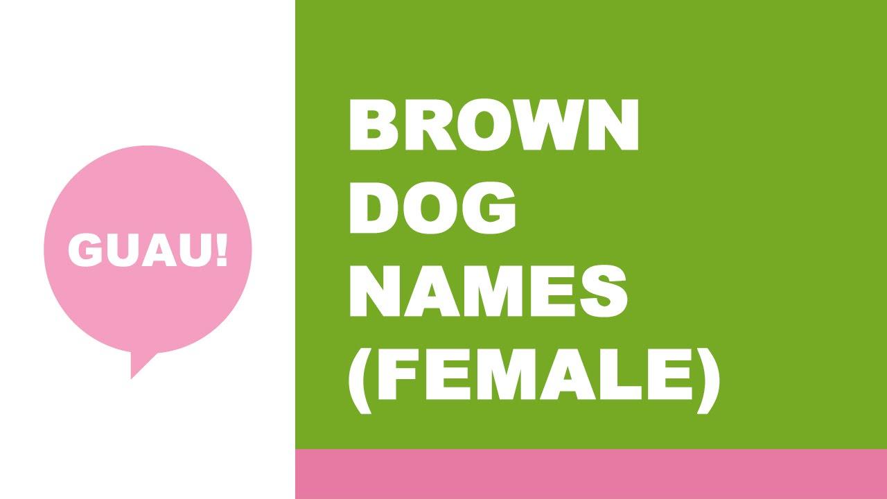 Best Female Brown Dog Names