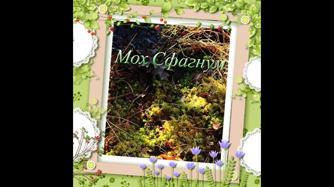 """Стабилизированный мох (ягель) торговой марки """"artis green"""" – это природный и натуральный мох, который собирается вручную в лесах скандинавии."""