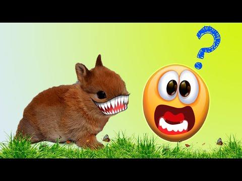 Почему кролик кусается и рычит?