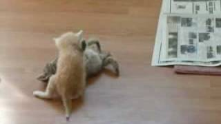 How to break a catfight!!!