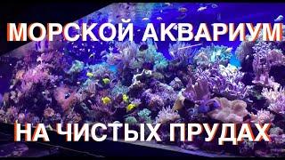 Морской Рифовый Аквариум - Океанариум Коралловый Сад на Чистых прудах