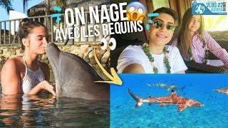 ON NAGE AVEC LES REQUINS & DAUPHINS A MOOREA !