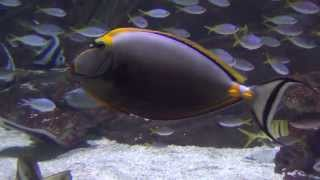 Aquarium Fish Videos And Music - Amazing Japanese Aquarium Fish Music Videos [aquarium Hd]