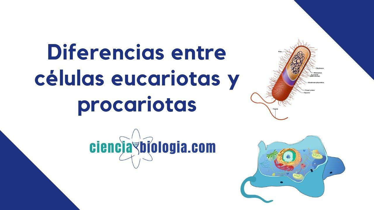 Diferencias Entre Célula Eucariota Y Procariota Fácil Todo Lo Que Necesitas Saber Youtube