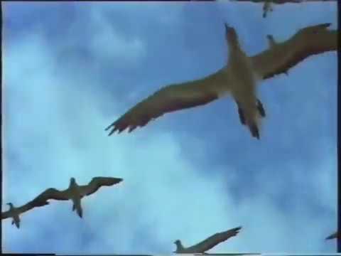 Air New Zealand - The Birds advertisement