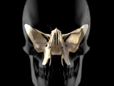skull demonstration.mp4 - youtube, Sphenoid