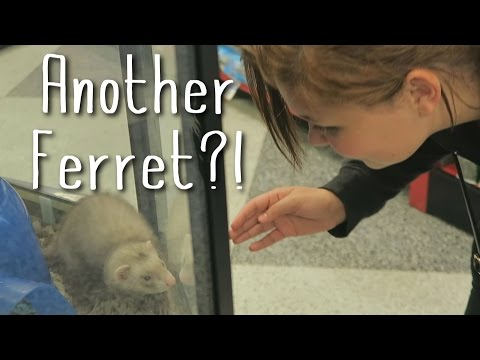 CAN WE GET ANOTHER FERRET??