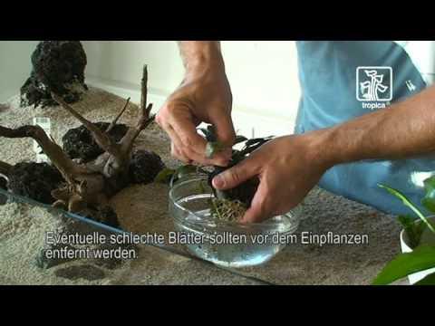 Tips Und Tricks Zur Handhabung Der Pflanzen Im Aquarium Youtube