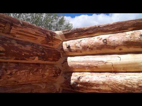 Готовый сруб бани из кедра, вид изнутри
