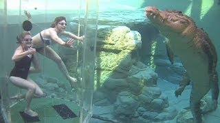 Osos, cocodrilos, tiburones: así es el turismo con animales thumbnail