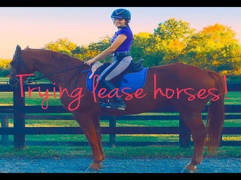 Trying a Lease Horse!