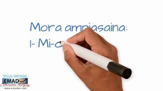 Emadex Mora be Vola Entana Madagasikara