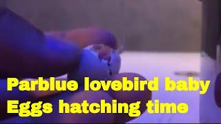 Birds Breeding Tips