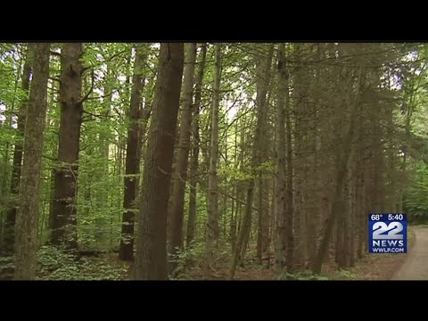 Two non-profit groups protesting logging plans at Wendell State Forest