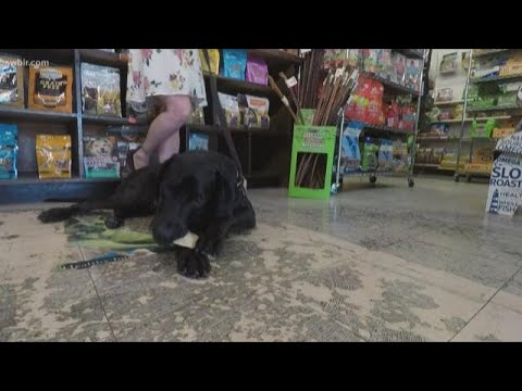 cbd-oil,-treats-help-manage-anxiety-in-dogs