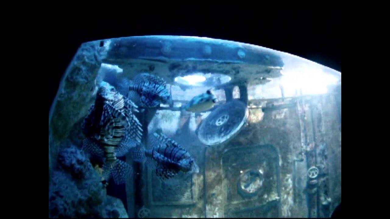 aquarium st malo youtube. Black Bedroom Furniture Sets. Home Design Ideas
