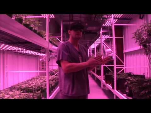Nevada Grown, part 1, The Grow