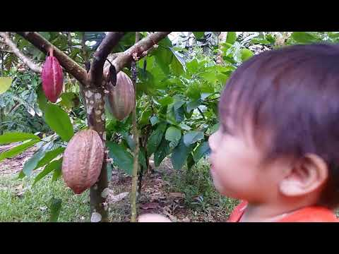 WELCOME TO RV CACAO FARM