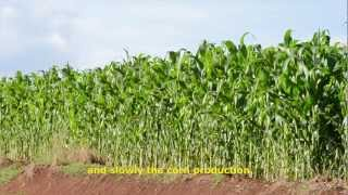 The benefits of agricultural biotechnology in Brazil