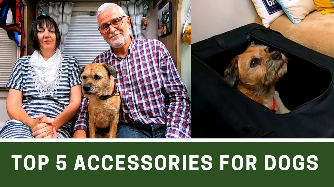 Top 5 ACCESSORIES with DOGS in a MOTORHOME | Vanners Collaboration July 2020 | Ep250