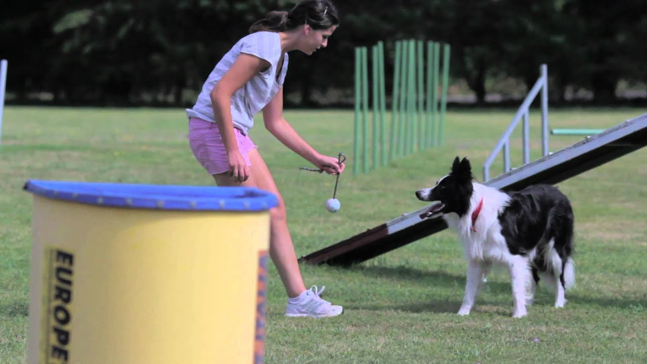 summer in petrademone allevamento border collie.mp4