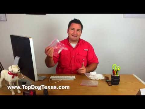 Diabetic Alert Dog Training: How to collect saliva samples for training.