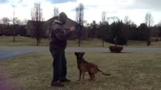 Frisbee Flip Belgian Malinois / Pak Masters Dog Training