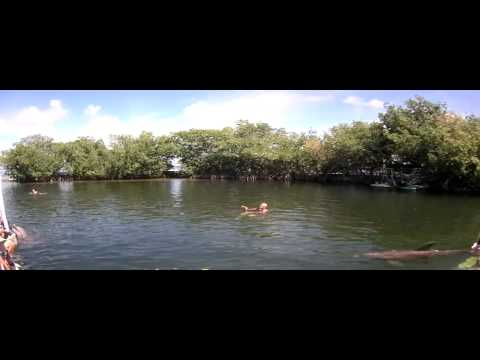 Dolphin Cove Key Largo