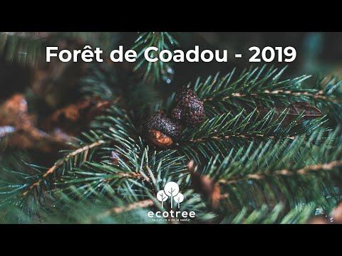 Forêt De Coadou