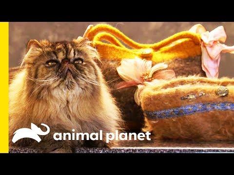 This Lady Makes Custom Handbags From Cat Fur!   Cats 101