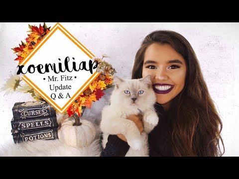 All About my Ragdoll Kitten | Updated Q&A | xoemiliap