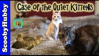 Case of the Quiet Kittens -- Cat Clips #303